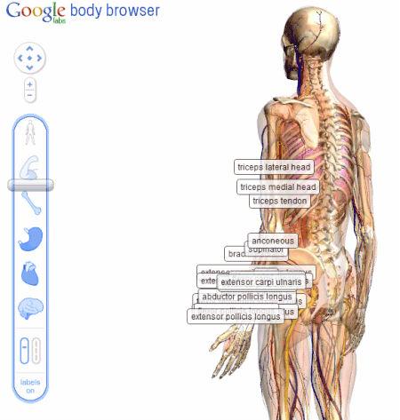 Google, dentro do corpo humano. | InfraRedMed